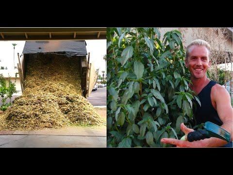 Amazing EDIBLE GARDEN & TREES Using WOOD CHIPS