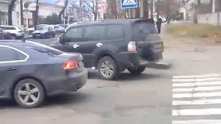 Мой город Н: в центре Николаева бродят бездомные собаки