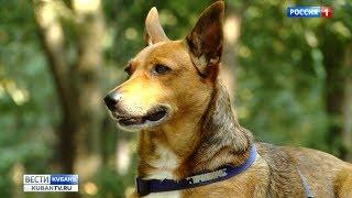 Рейд по правилам выгула собак провели в Краснодаре