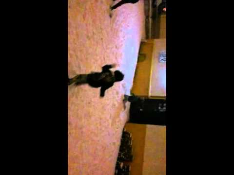 Yavuz Selim kar topu oynama