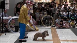 ピエロさんとおもちゃのライオンさんの演技は必見!何回観てもオモシロ...