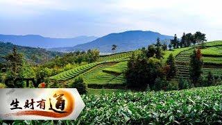 《生财有道》 20190621 美味中国系列 福建福鼎:传统美味 匠心财富| CCTV财经