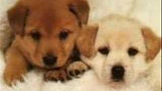 puppy luv 2