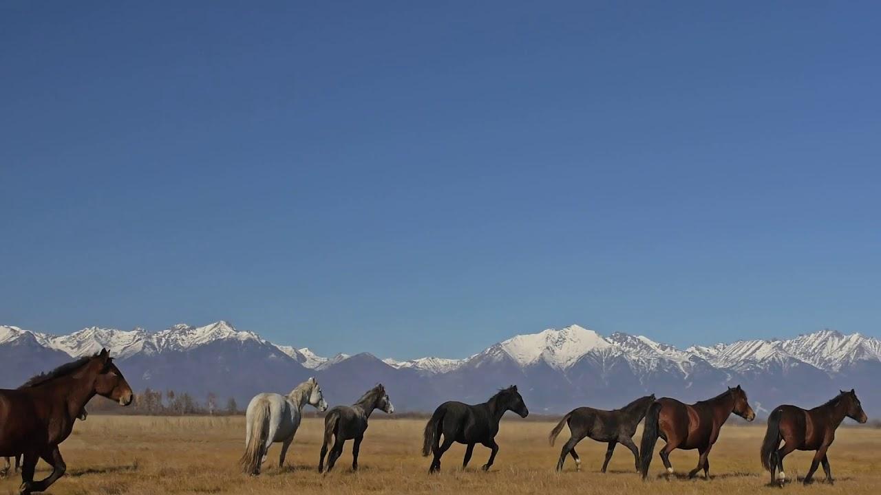 Music & Horses (Intro)