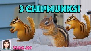 Vlog 495: 3 CHIPMUNKS!