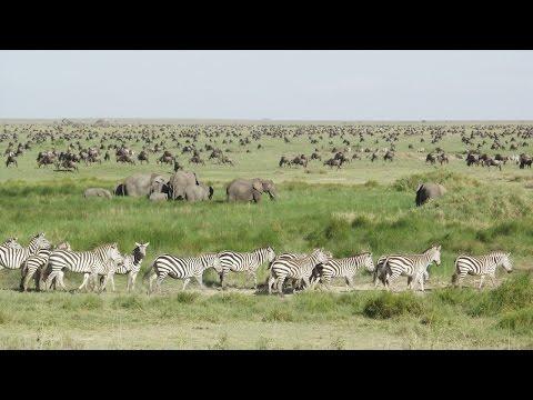 Tanzania -- 2008_2_Serengeti