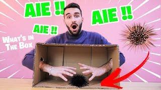 Y'A QUOI DANS LA BOITE ?! (What's in The Box Chall...