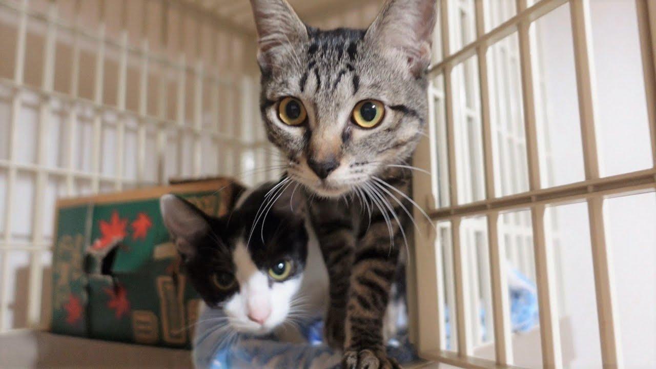多頭崩壊の現場から保護された猫2匹を引き取ってきました【保護猫】