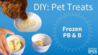 DIY Pet Treats: Frozen PB & B