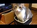 【かわいい】洗濯かごの中から出ようとしない猫!