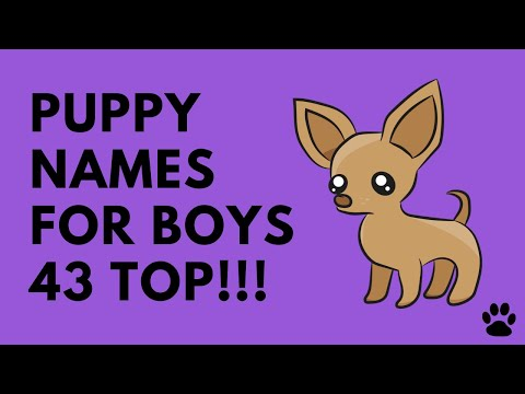 Puppy Names For Boys - 43 CUTE IDEAS - Names!!!