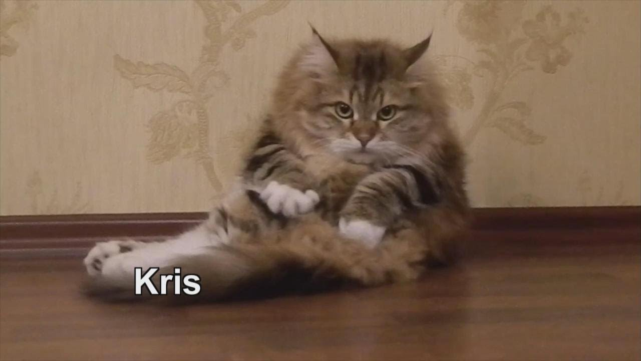 The 'Keeping Up with the Catdashians' Debut