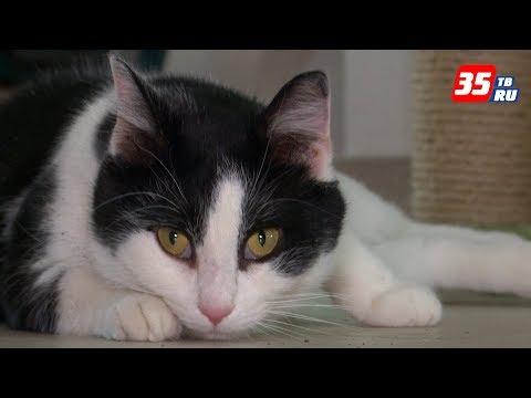 """Для фанатов кошек в Череповце откроется специальное """"котокафе"""""""