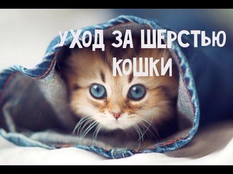 Британские котята, кошки и коты Старейший питомник