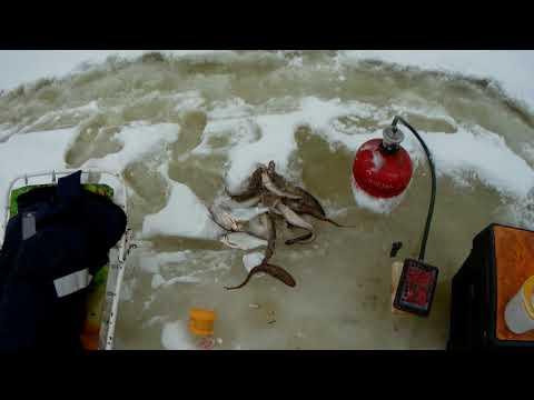 За налимом на рыбалку и не только.
