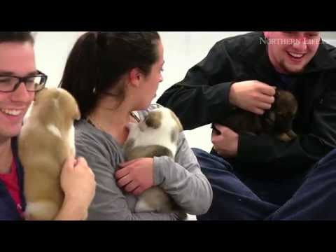 The power of puppies