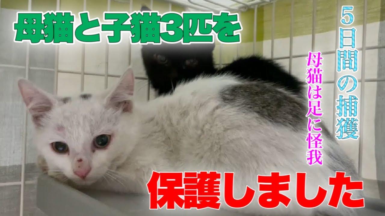 足を怪我したママ猫と子猫3匹のレスキュー5日間の記録【We rescued a mother cat and kittens】