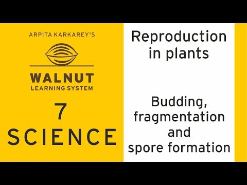 7 Science - Reproduction in plants - Budding fragmentation and spore formation