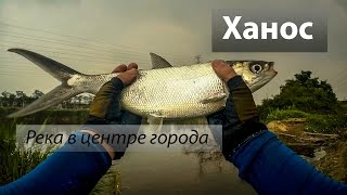Река 鹽水溪, Тайвань. Молочная рыба или Ханос (虱目魚) на мушку. 2016/12.