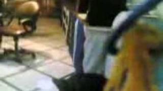 محمد علاء والكلب