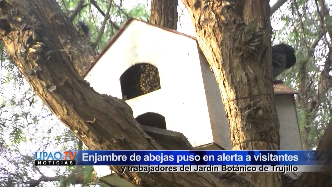 Enjambre de abejas en jard n bot nico 16 abril youtube for Ahuyentar abejas jardin