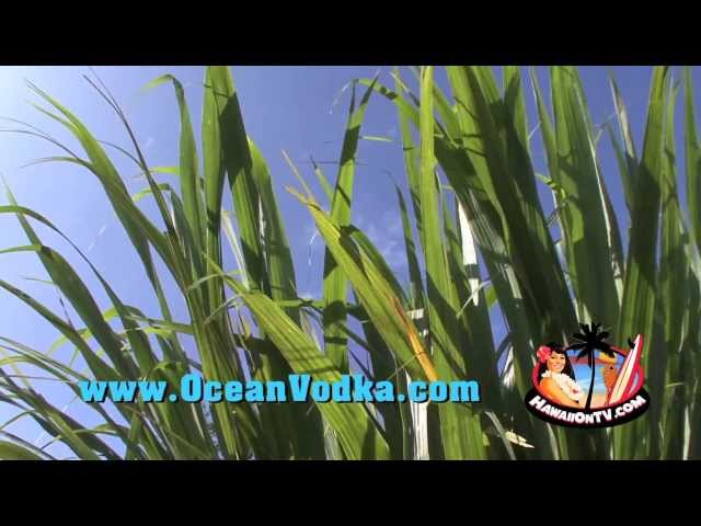 Ocean Vodka Distillery - Maui Grand Opening