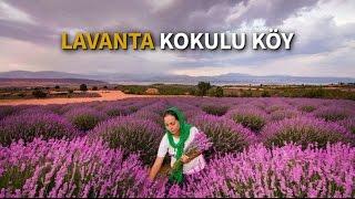 Özel Haber: Lavanta kokulu köy