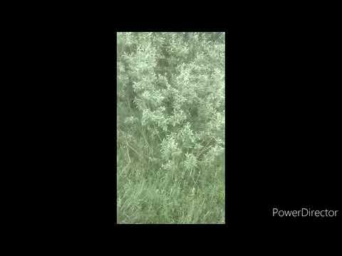 Видео: #браконьеры #зсл #собаки. Браконьеры.так нельзя