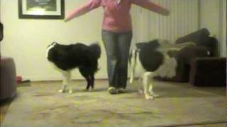 Spin & Twirl: Clicker Training Dog Tricks