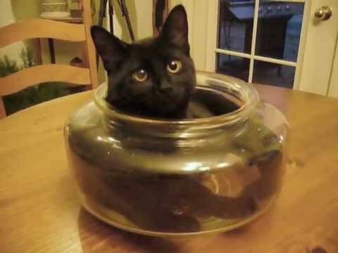 Cat Fish Bowl