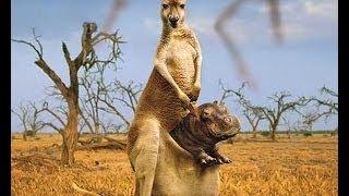 Śmieszne zwierzęta [ funny animals ]