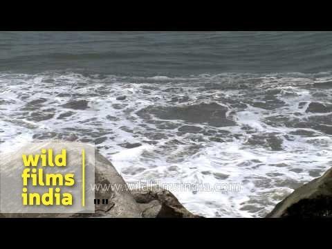 Waves of Arabian sea as seen from Neendakara Beach, Kerala