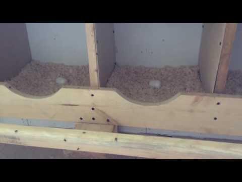 Как построить курятник своими руками Мужик в домеРу