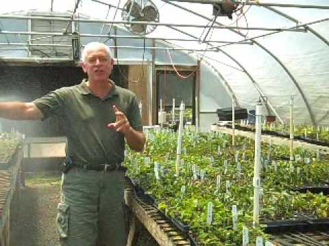 The Difference Between Own Root and Grafted Roses