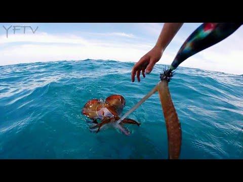 CALAMARI SQUID MADNESS EGI STYLE - YouFishTV