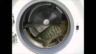 Очень смешные кошки подборка