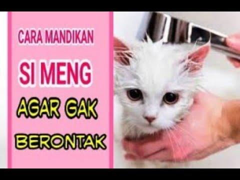 Cara Memandikan Kucing Agar Tidak Berontak Youtube