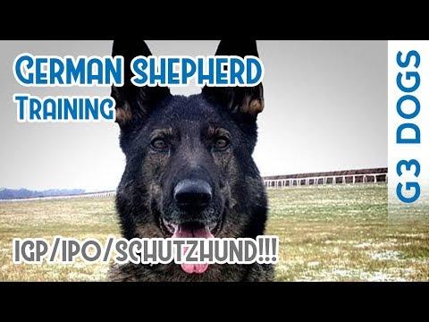 Anna - German Shepherd Training