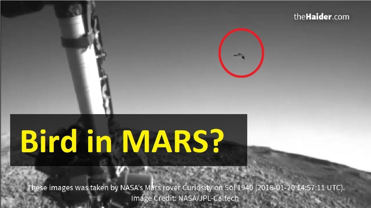 BIRD in MARS   New UFO Image by NASA - YouTube