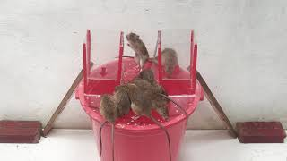 Rat Trap Water 🐀 10 Mice in trapped 10 Minutes 🐭 Mouse/ Rat trap 👍 How to Make Rat Trap #7
