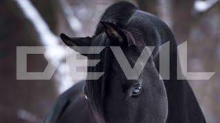 Devil || Equestrian Music Video ||