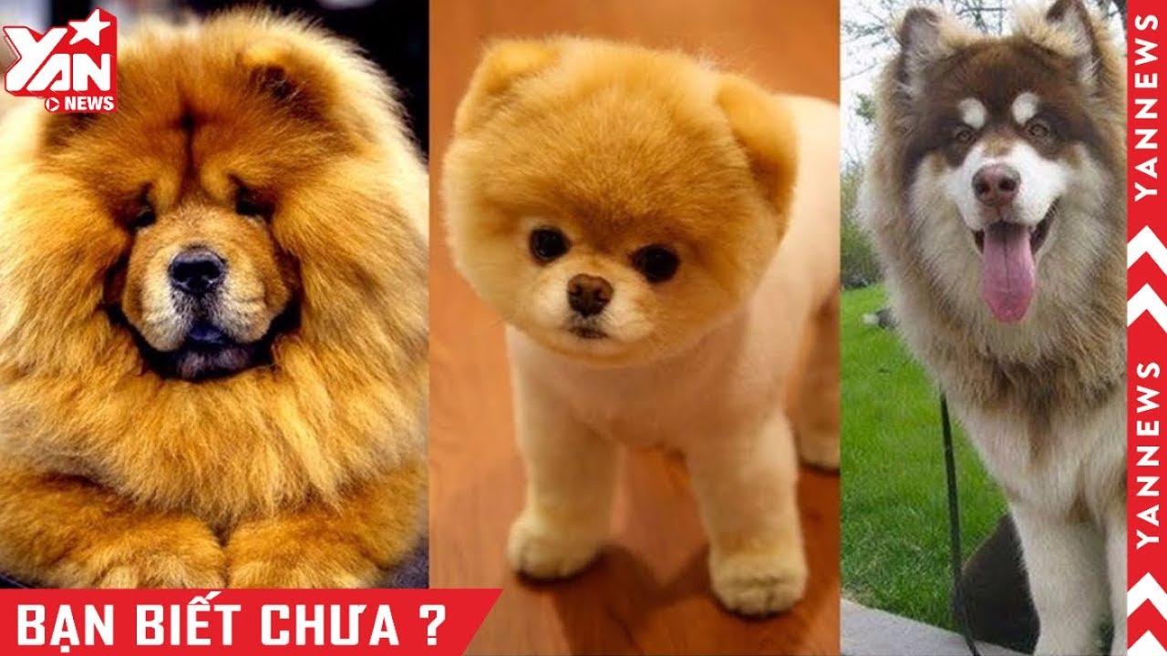 Top 10 giống chó đáng yêu vô địch vũ trụ ai nhìn cũng thích mê