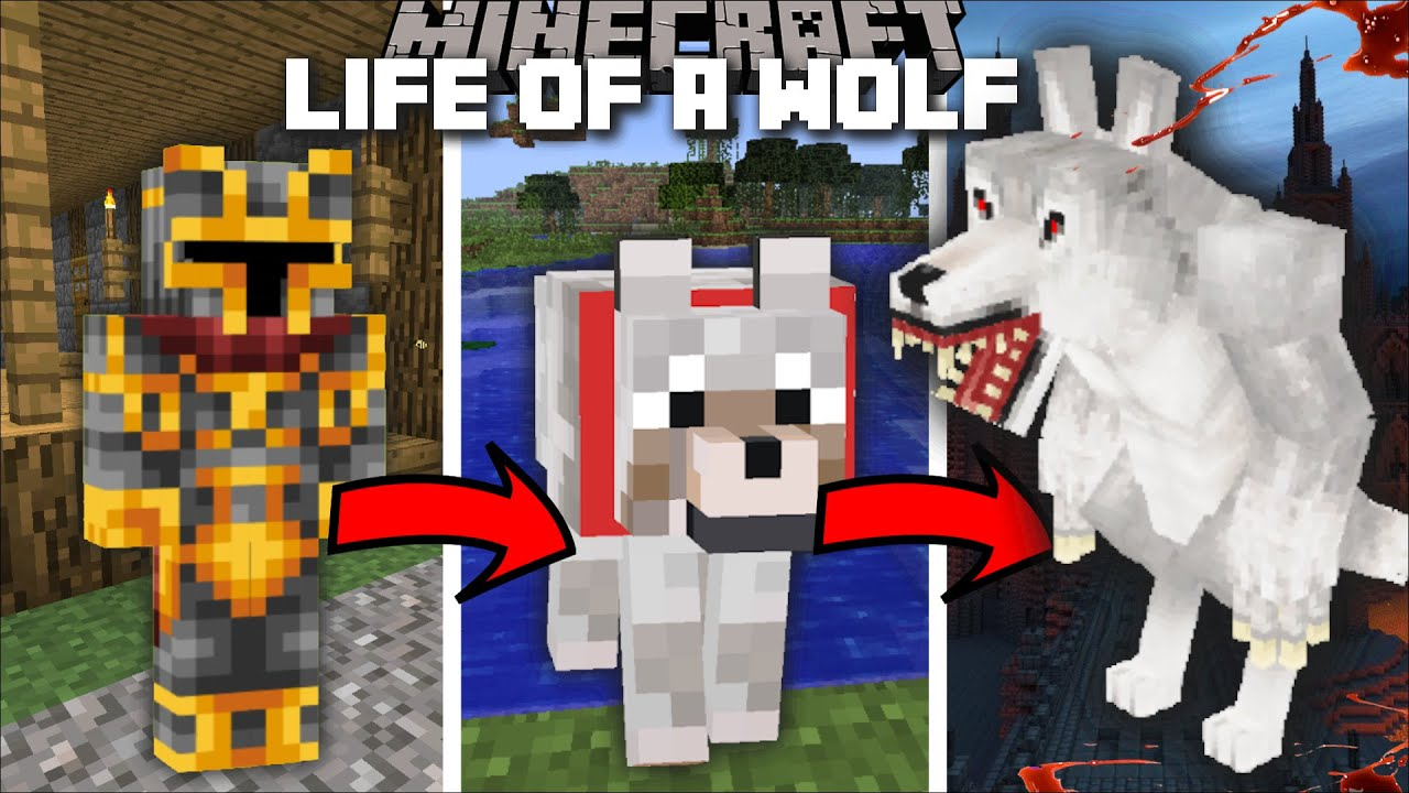 Minecraft LIFE AS A WOLF MOD / GO AROUND EATING ALL THE ANIMALS POSSIBLE !! Minecraft Mods