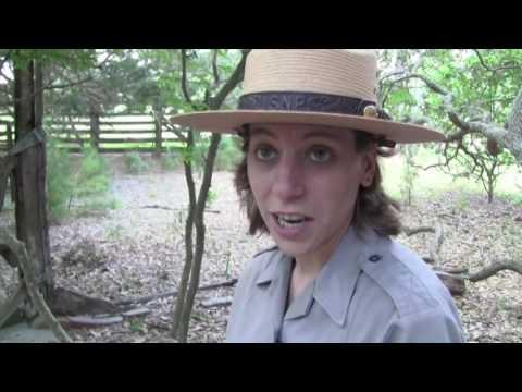 Cumberland Island II Part 1