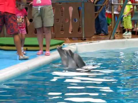 Сочинский дельфинарий. Фото с дельфином