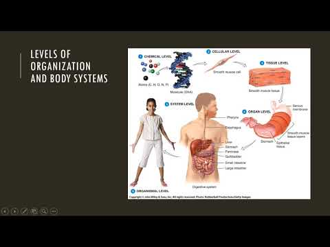 Principles Of Anatomy And Physiology Chapter 12 Youtube