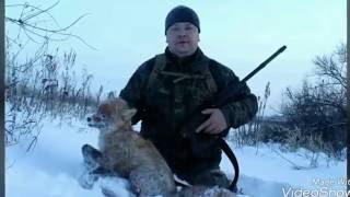 Охота на лису капканом зимой у норы