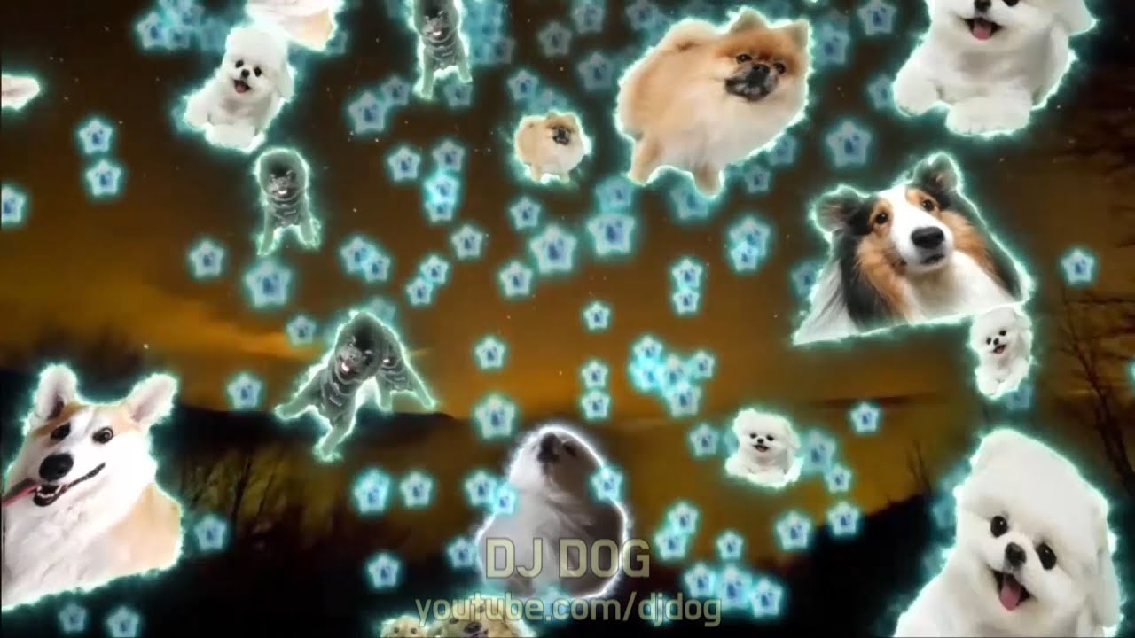 하늘에서 내리는 1억개의 개