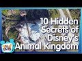 Bet You Didn't Know About These Behind the Scenes Secrets at Disney's Animal Kingdom!