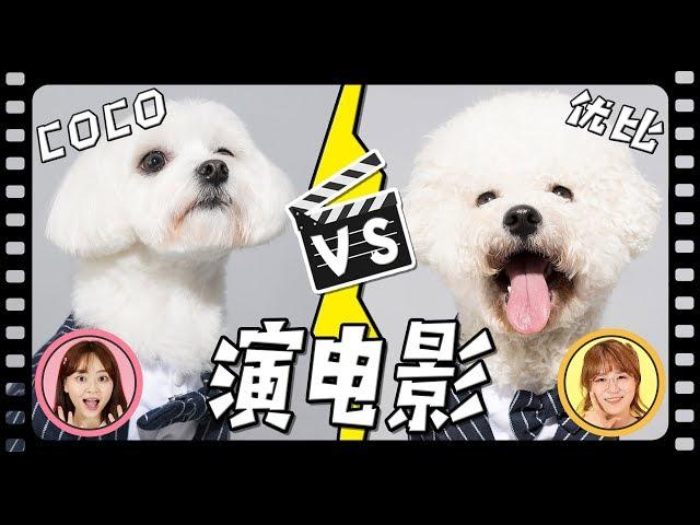 coco和優比演電影了?狗狗成為電影明星的培訓課程!小伶玩具 | Xiaoling toys